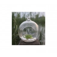 Glass Vase and aquarium for home decor or gift